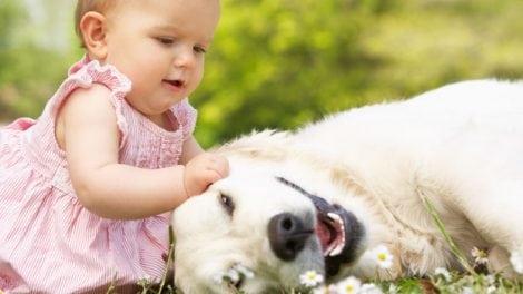 תינוק וכלב